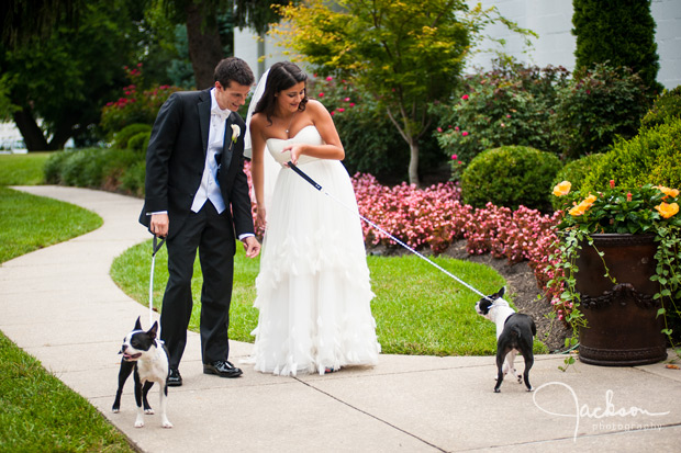 bride and groom with boston terriers